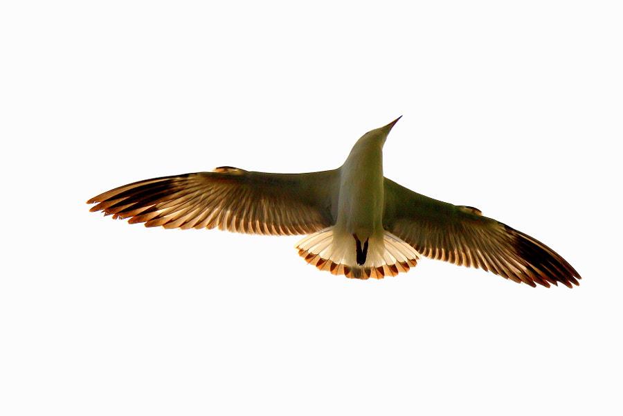 Seagull @ Mumbai
