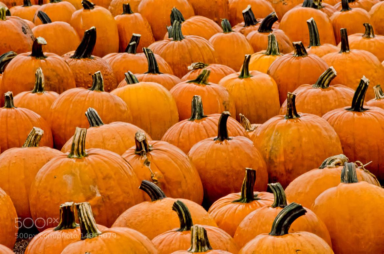 Photograph Pumpkin paradise by Mark Cherrington on 500px