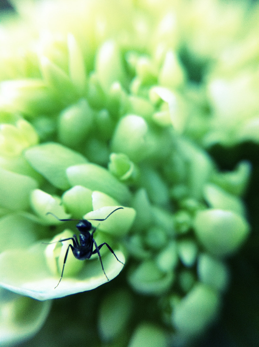 Photograph Ant (triptych 3) by Teelip Lim on 500px