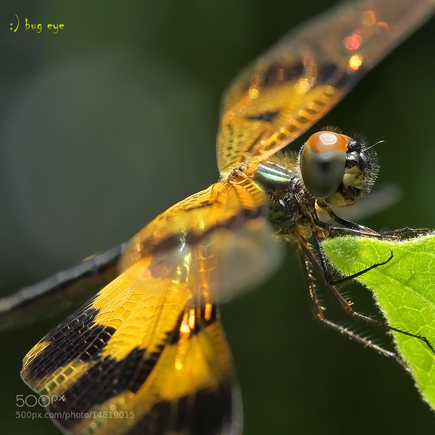 Photograph \\\\\ sunbath ///// by bug eye :) on 500px