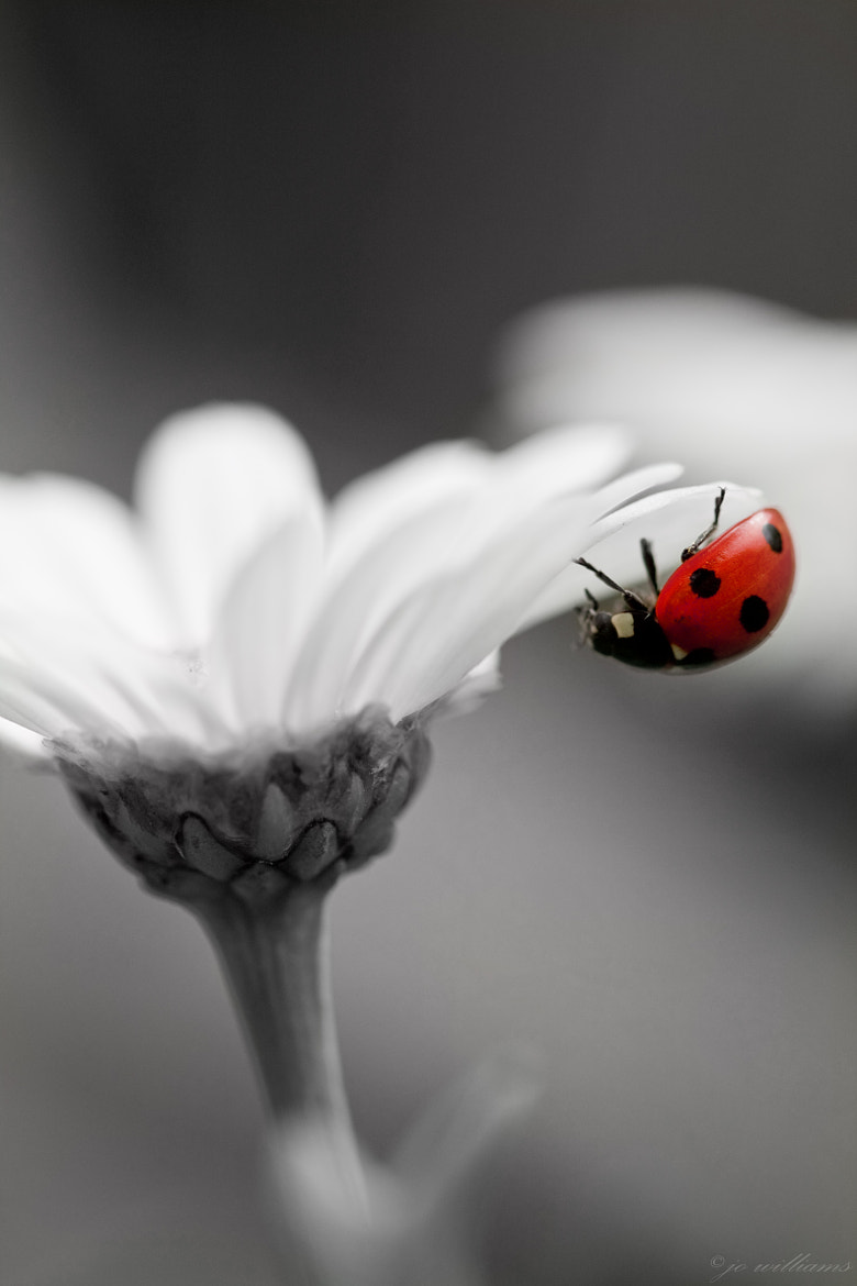 Photograph ...im not black or white by jo williams on 500px