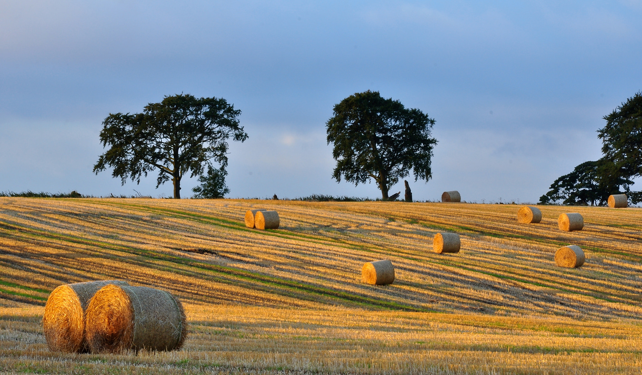 Photograph Late Harvest by Jim Wilson on 500px
