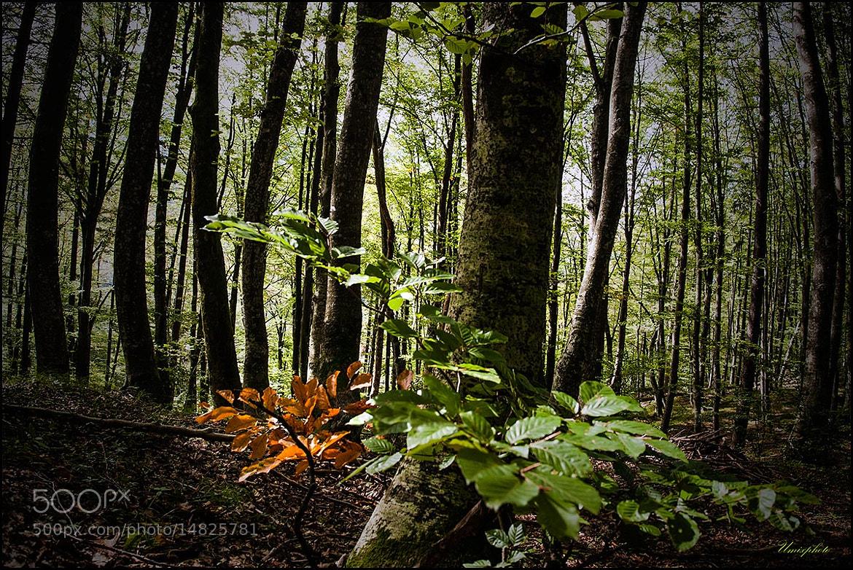 Photograph In The Wood by Jaro Miščevič on 500px