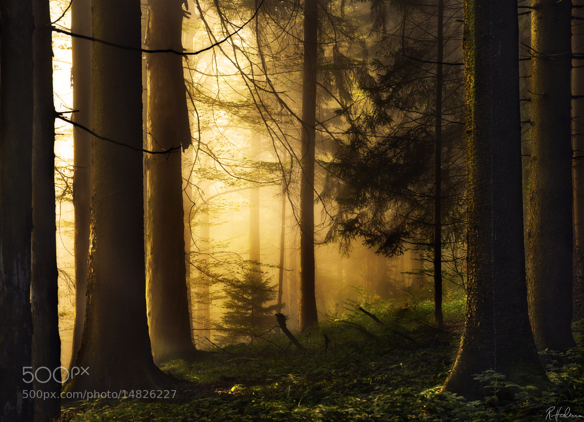 Photograph Morning Light by Robin Halioua on 500px