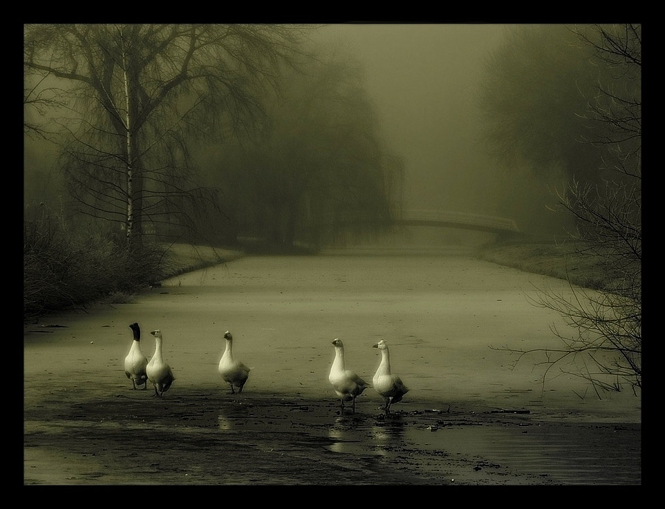 Photograph Together by Ece Aktansel on 500px