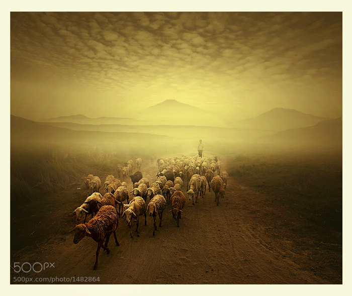 Photograph shepherd by Teuku Jody  Zulkarnaen on 500px