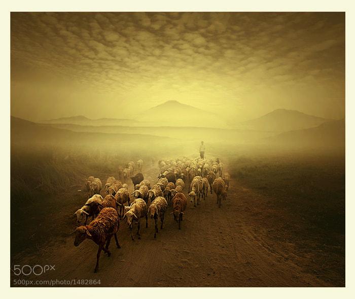 Photograph shepherd by Teuku Jody  Zulkarnaen on 500px