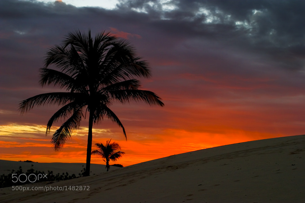 Photograph Coconut Sunset by Mario Moreno on 500px