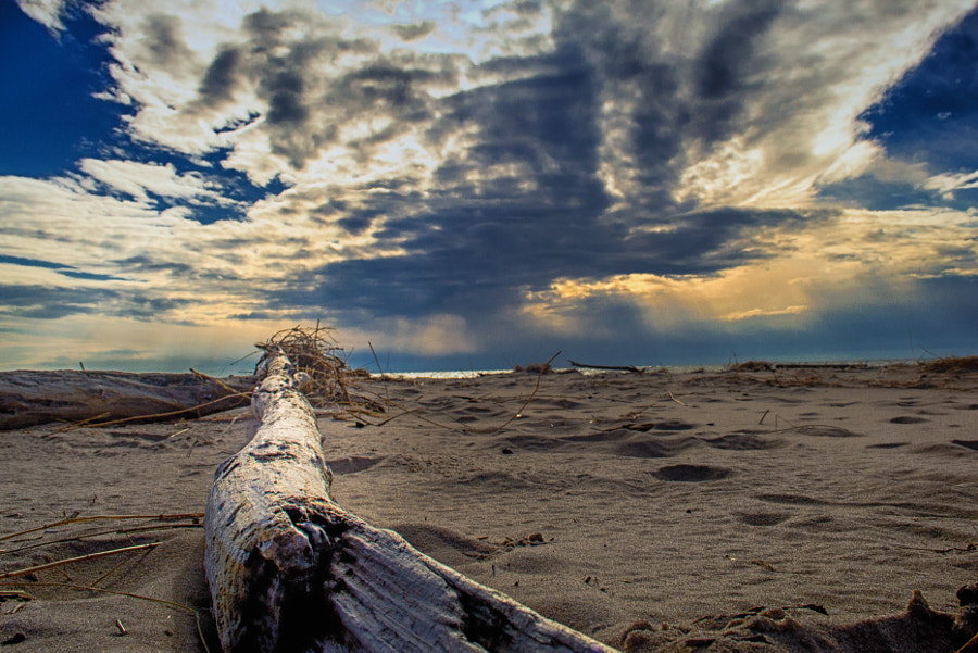 Driftwood by Christopher Mowers on 500px.com