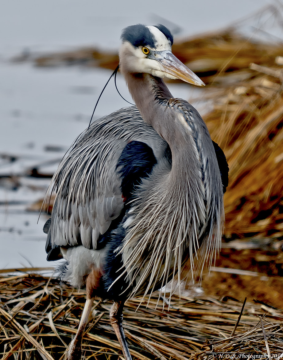 Photograph GBH by Harold Begun on 500px