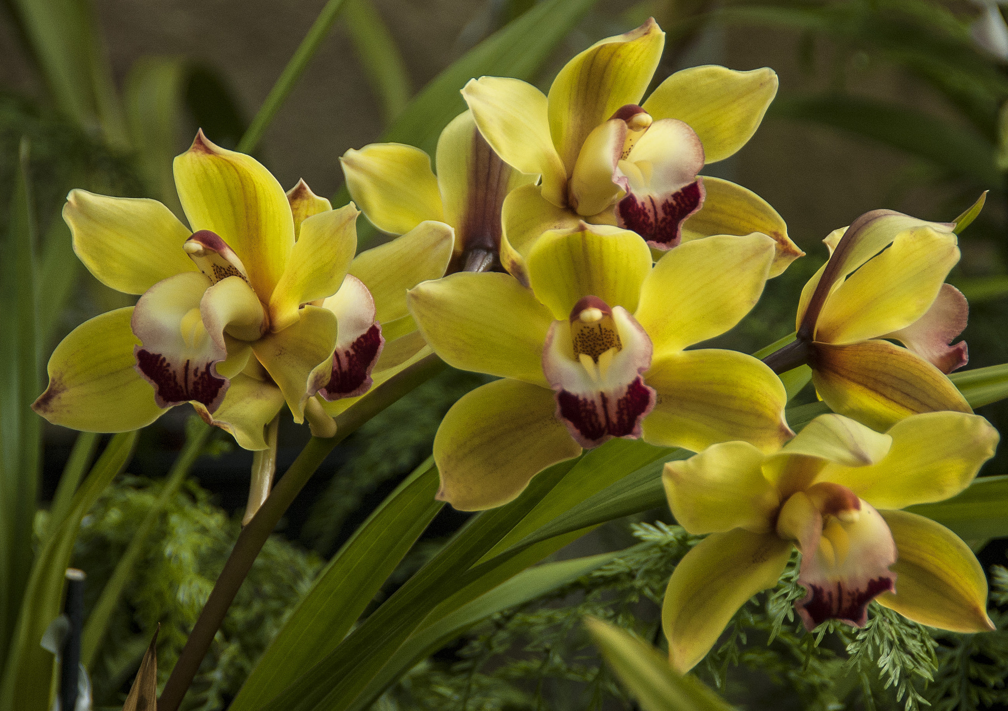 Photograph Orchids by Margaret Morgan on 500px