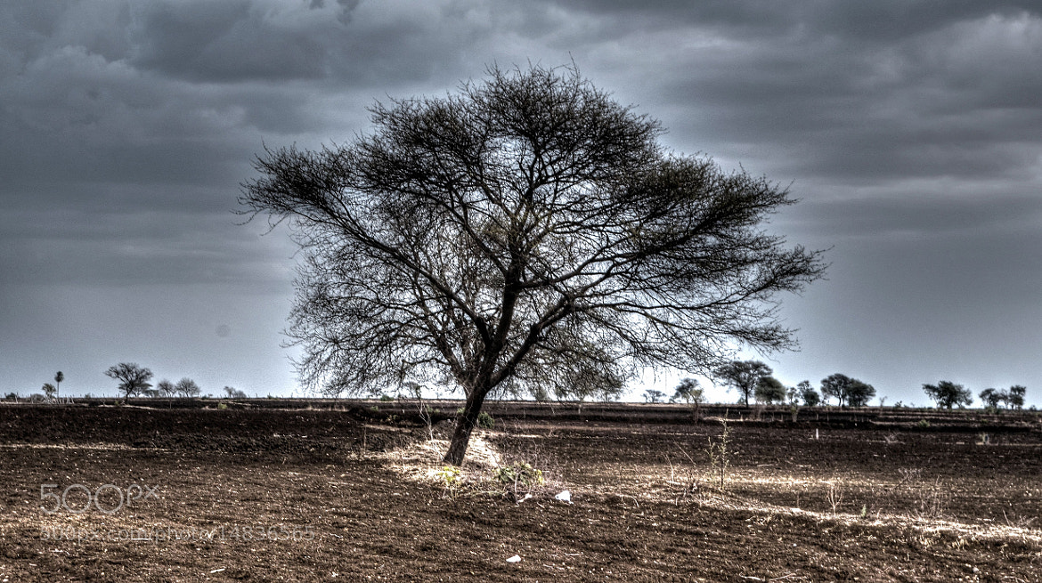 Photograph Lonely Tree by Dhirendra Singh on 500px