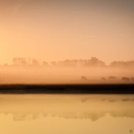 A simple morning, Canon EOS 1000D, Canon EF-S 18-55mm f/3.5-5.6 USM