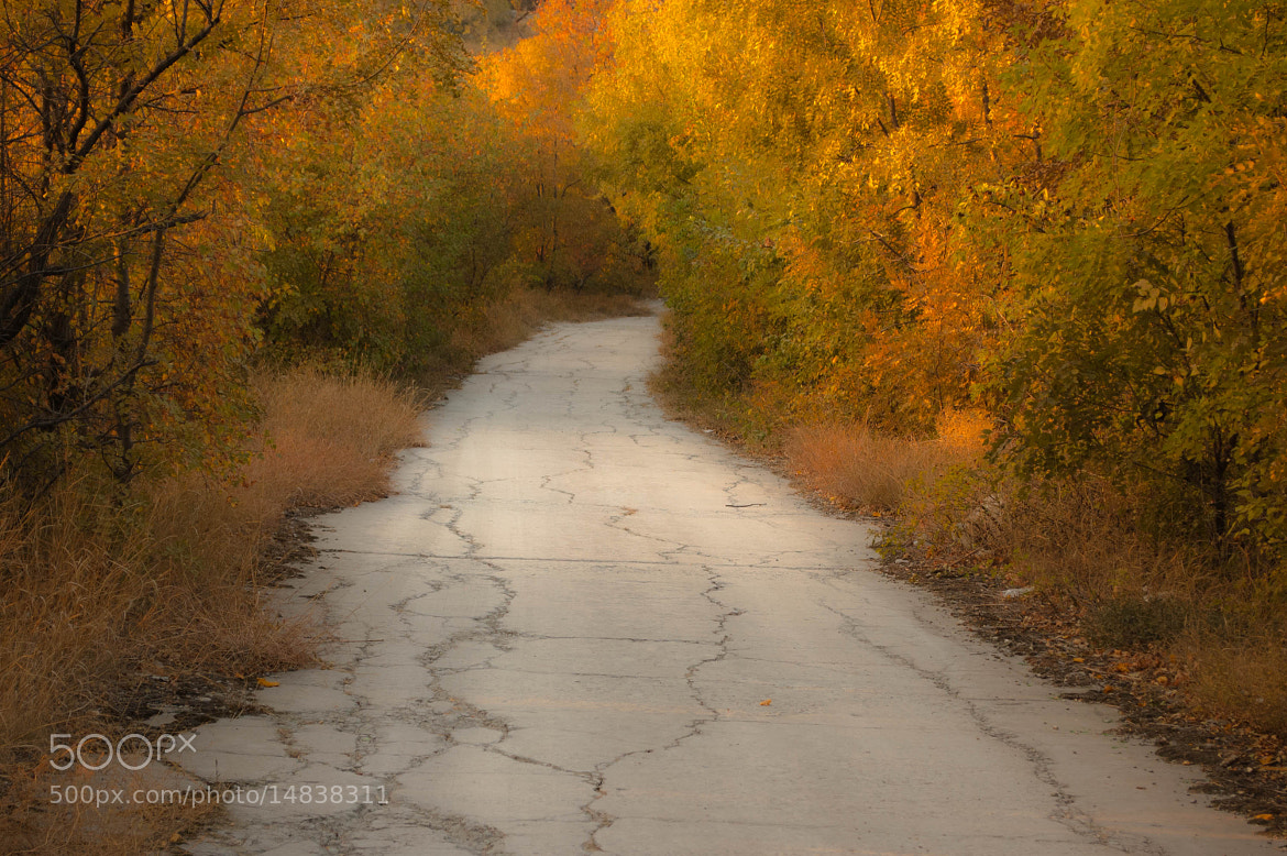Photograph Autumn by Longland  River on 500px
