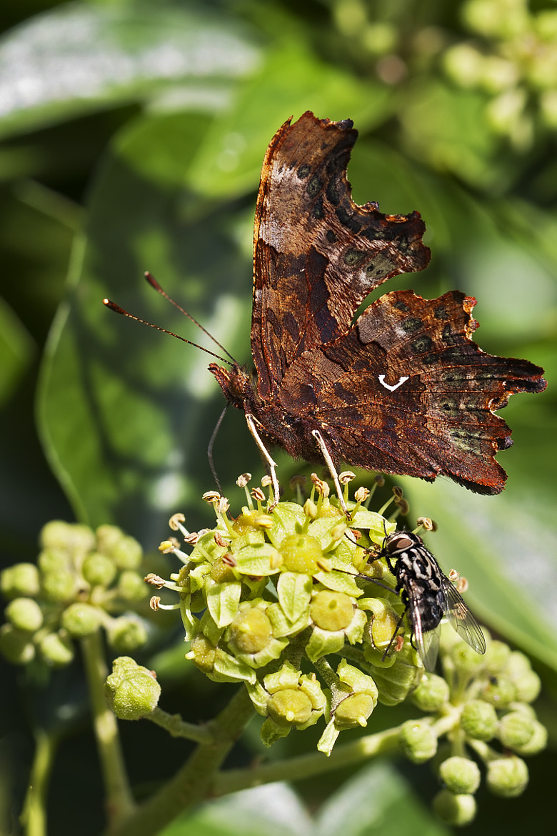 Photograph Comma by Tim Tapley on 500px