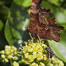 Comma by Tim Tapley (TimTapley)) on 500px.com