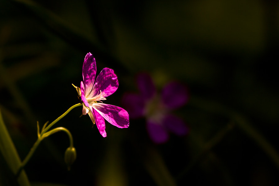 Photograph Spotlight by Benjamin Egermann on 500px