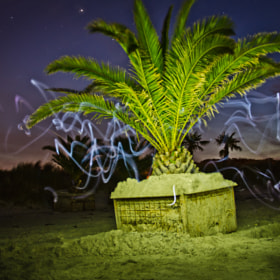 Stars and palm by Peter Andersen (PeterEmilAndersen)) on 500px.com