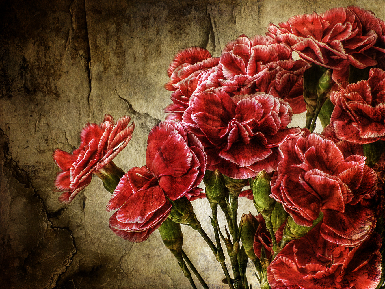 Photograph Carnations by Link Bekka on 500px