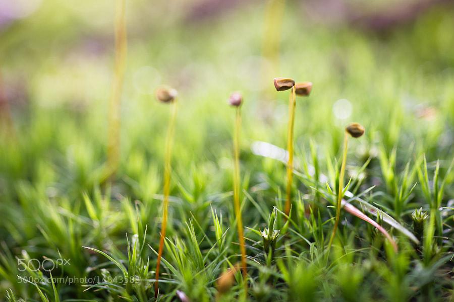 Photograph Moss by Benjamin Egermann on 500px