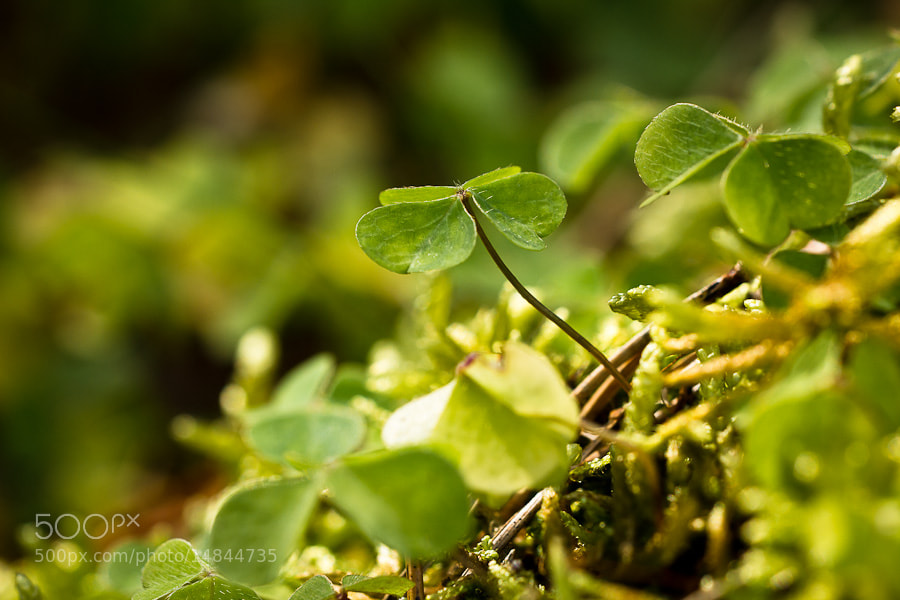Photograph Clover in the Forest by Benjamin Egermann on 500px