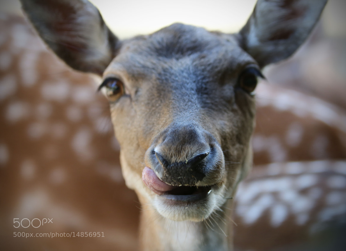 Photograph Tounge in cheek by Lars Barstad on 500px