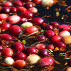 Cranberry harvest, fall, Wisconsin Rapids, Wisconsin