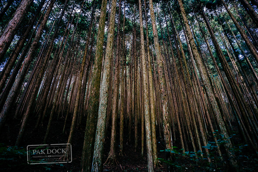 Forest in the Nakasendo Trail by PAkDocK @PAkDocK on 500px.com