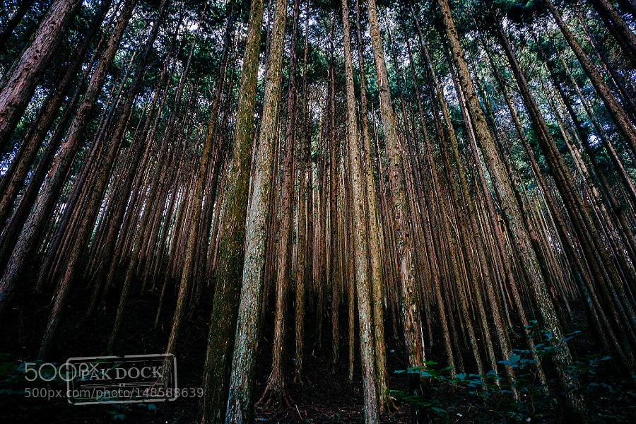 Forest in the Nakasendo Trail