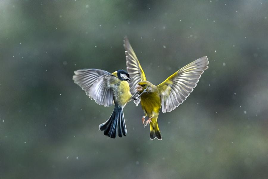 Fighting in the rain by Marco Redaelli on 500px.com