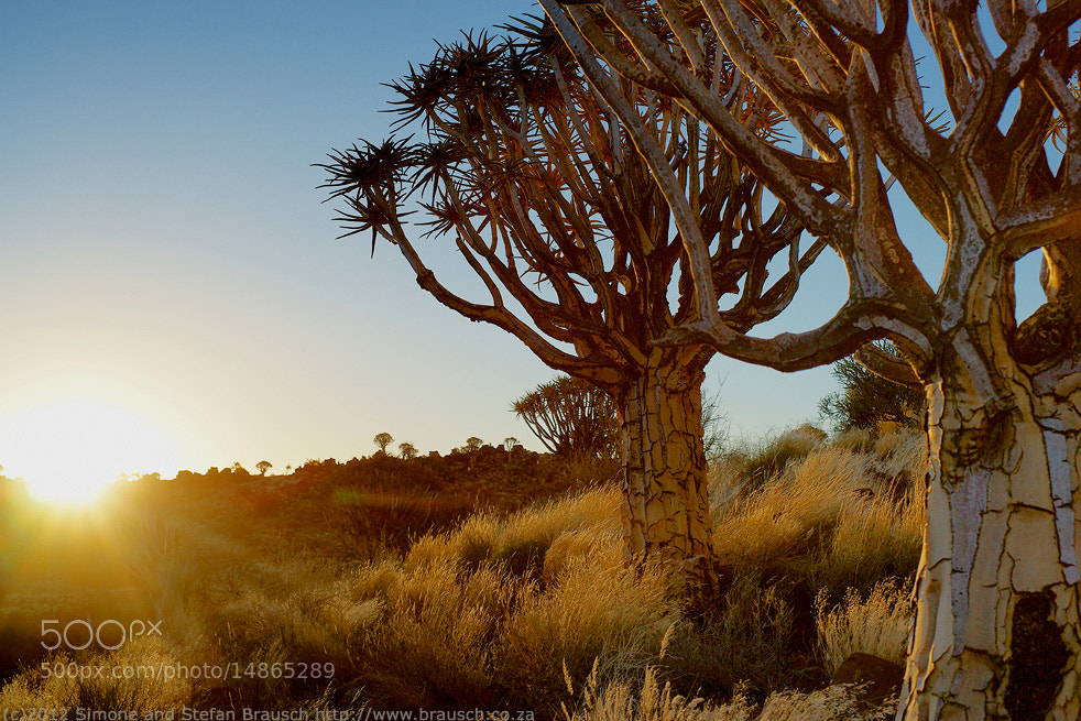 Photograph Kokertrees by Simone and Stefan Brausch on 500px