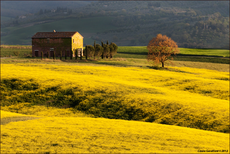 Photograph yellow by Cinzia Garattoni on 500px