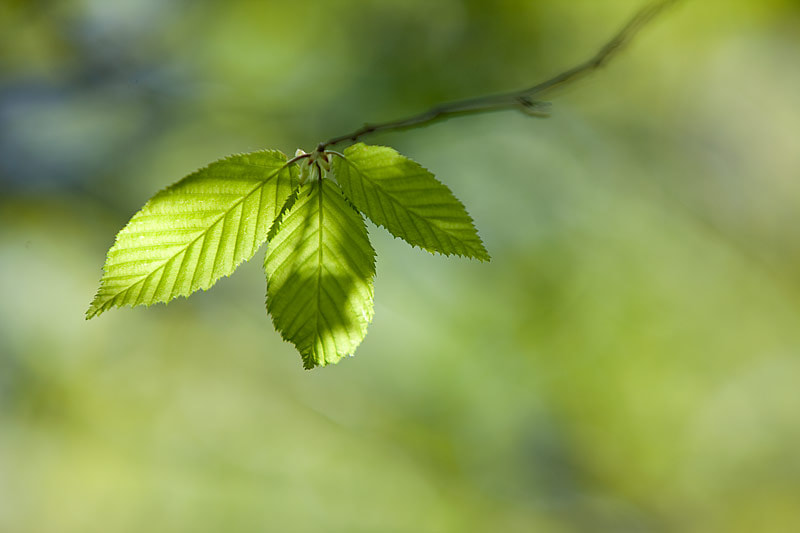 Photograph  fresh green by brilorenz on 500px