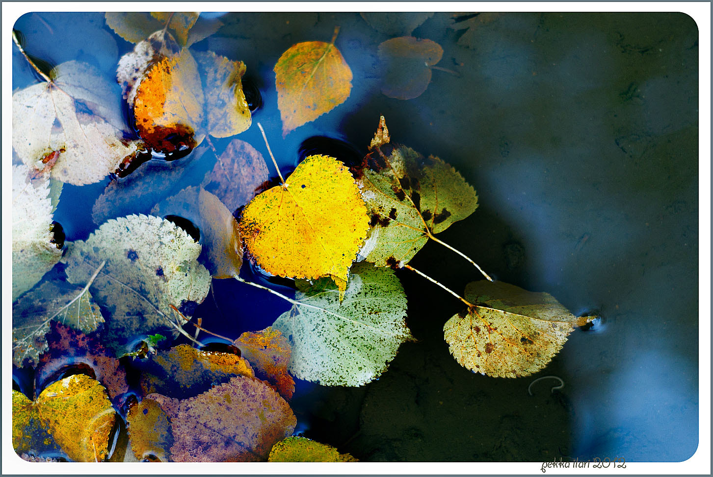Photograph Leaves by Pekka Ilari T. on 500px