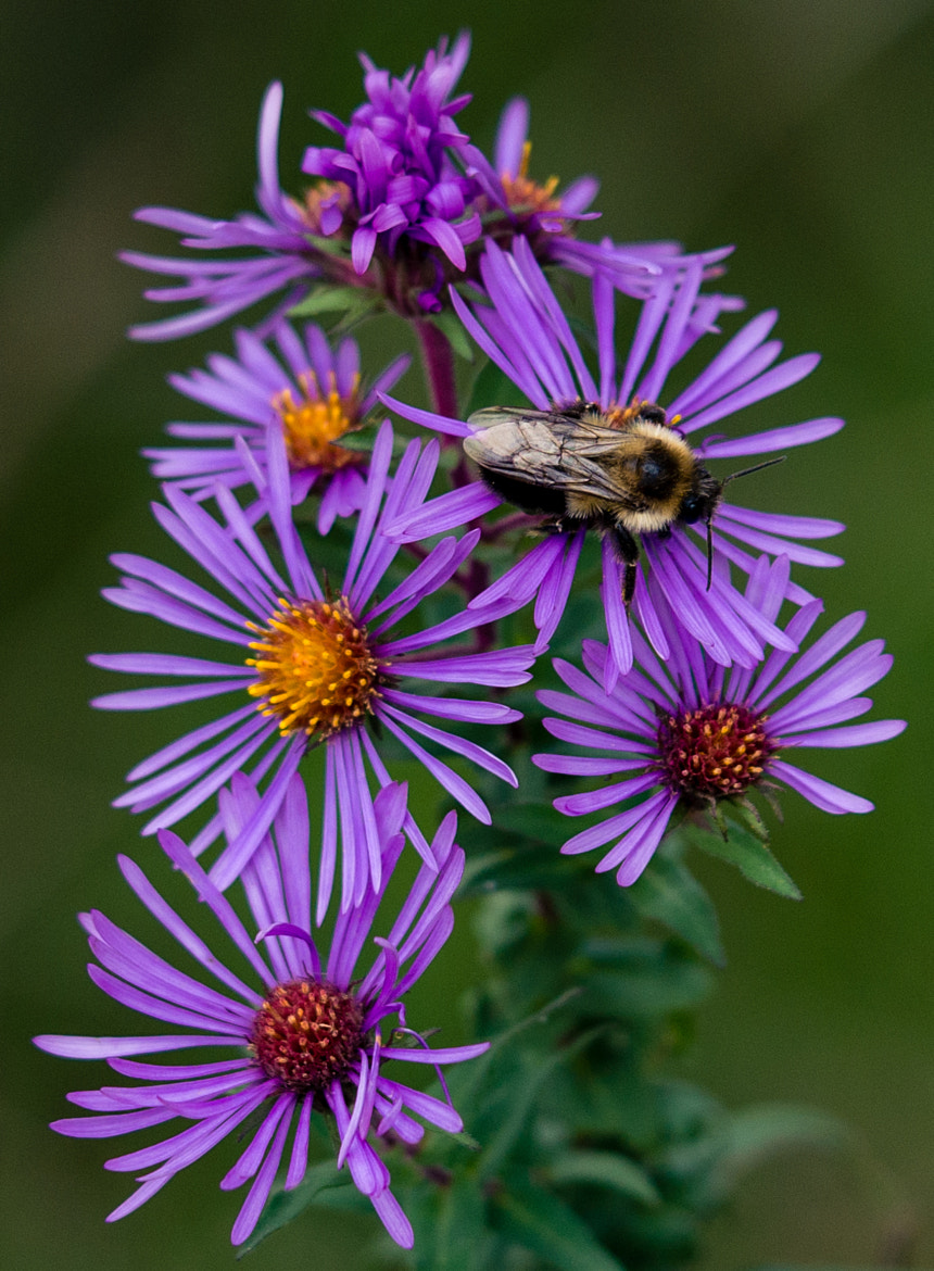 Photograph bee flower by Ralph Mason on 500px