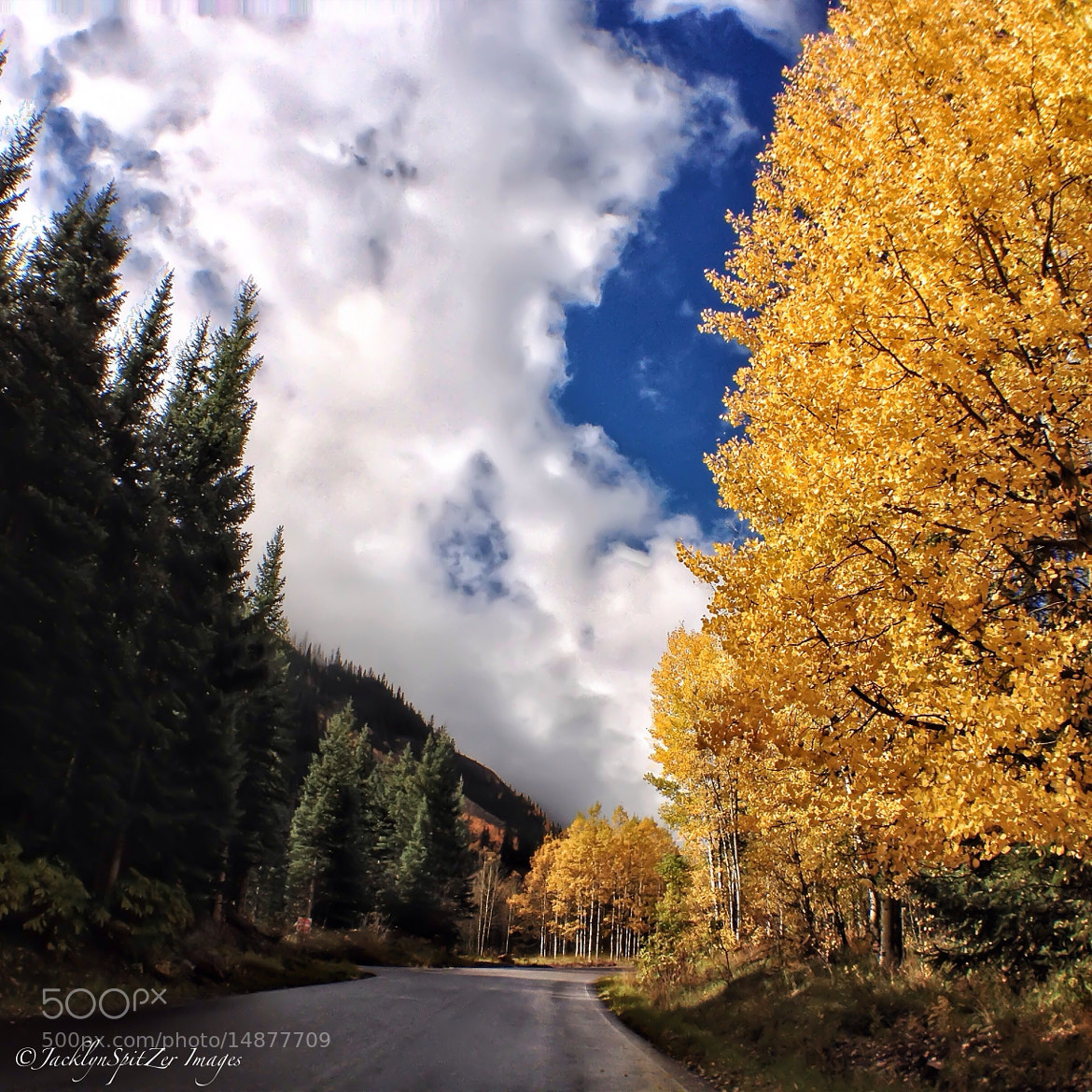 Photograph Fall in Aspen, Colorado by Jacklyn Spitzer on 500px