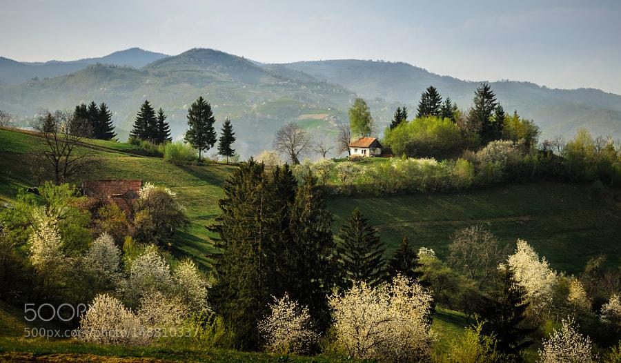 Alexandru staiu alexandrustaiu photos 500px sweet april showers do spring may flowers mightylinksfo