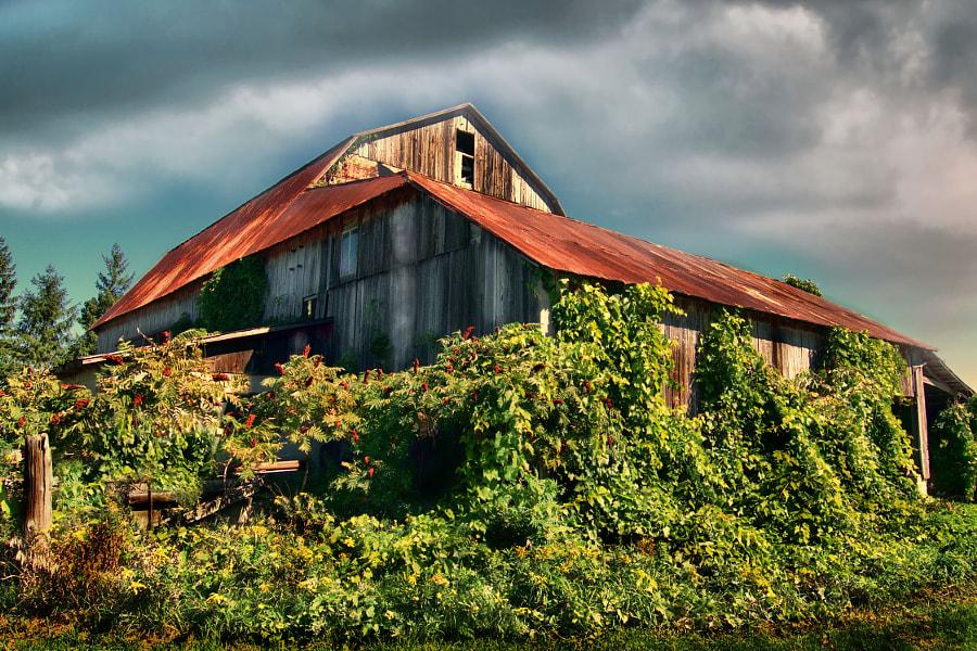Barn in the Sumac