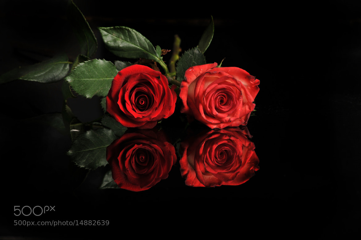 Photograph Couple of roses by Cristobal Garciaferro Rubio on 500px