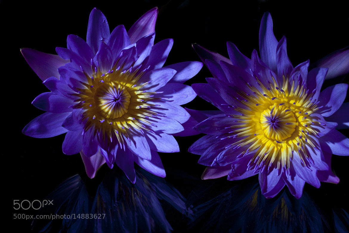 Photograph Water lilies by DEW SP on 500px