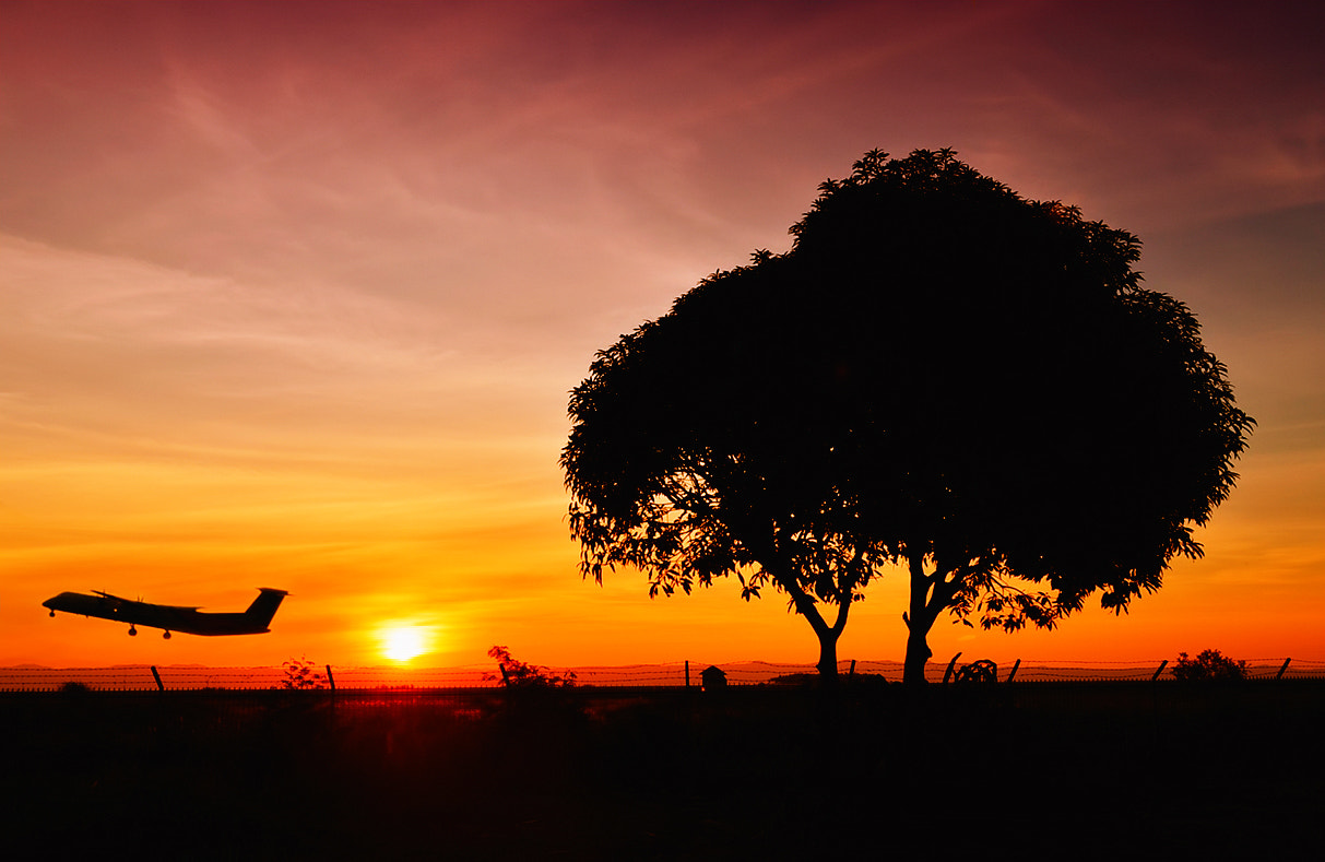 Photograph Late afternoon flight by Vey Telmo on 500px