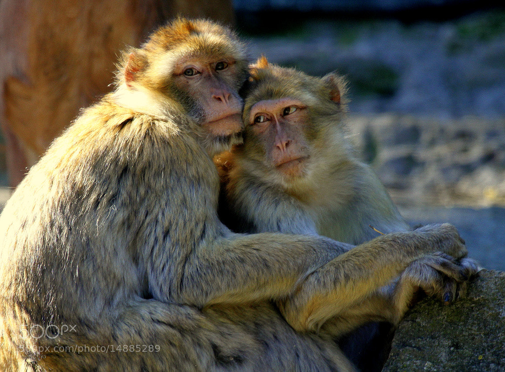 Photograph True intimacy by Rainer Leiss on 500px