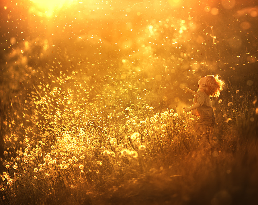 Dandelion feeling (re-edit.) by Elena Shumilova on 500px.com