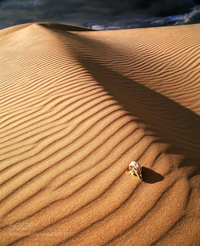 Photograph Desert Skull by Marcus McAdam on 500px