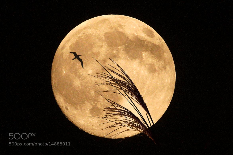 Photograph Harvest moon by Mitsuru Moriguchi on 500px