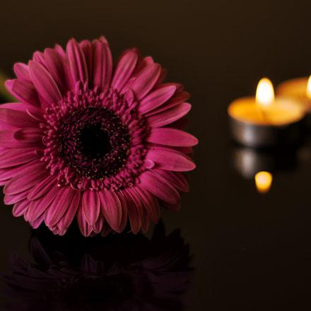 Romantic flower ❤