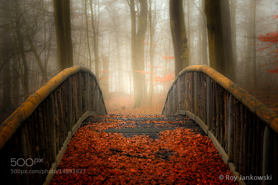 Photograph Welcome Autumn by Roy Jankowski on 500px