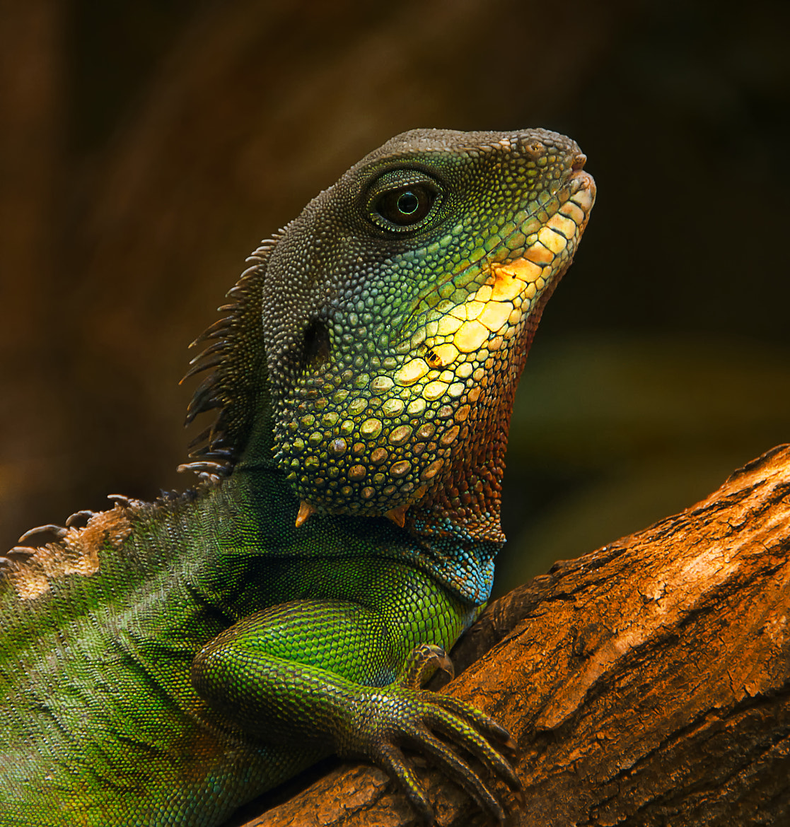 Photograph proud dragon by Sonja Probst on 500px