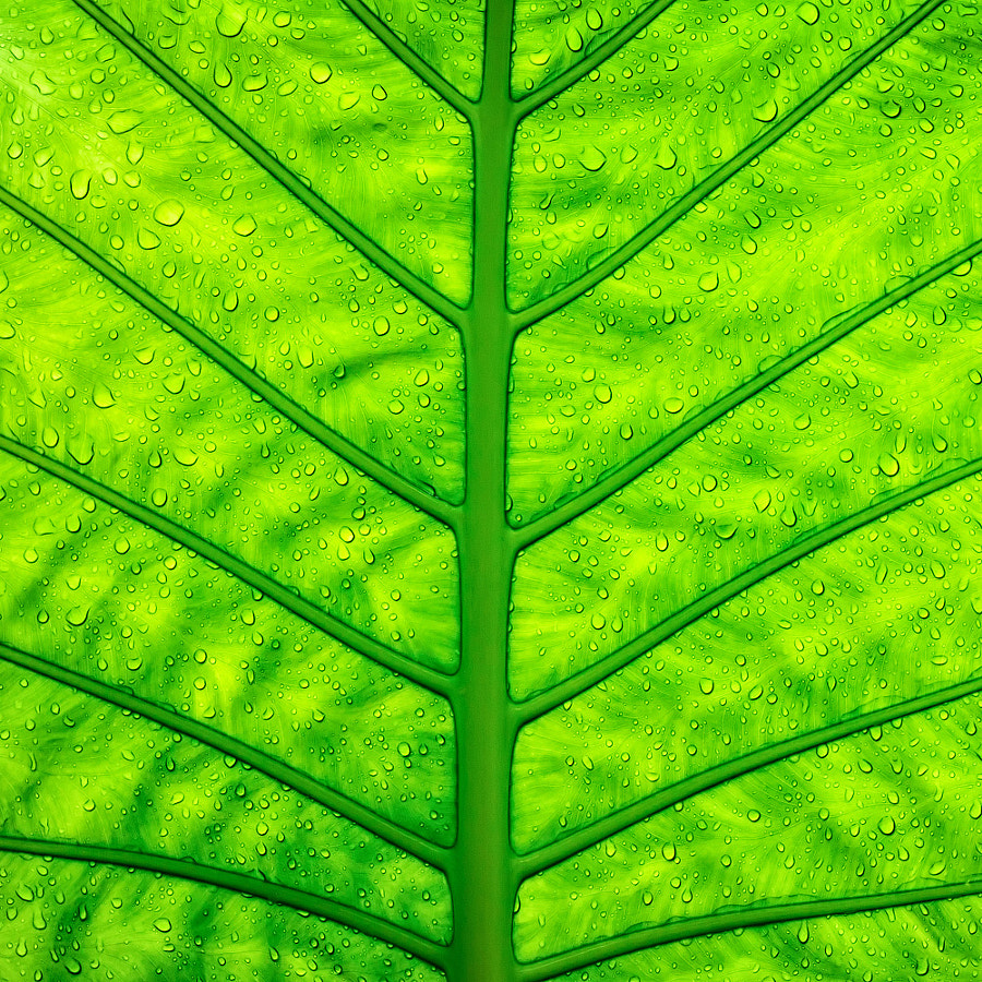 Close up green leaf texture by Daria Garnik on 500px.com