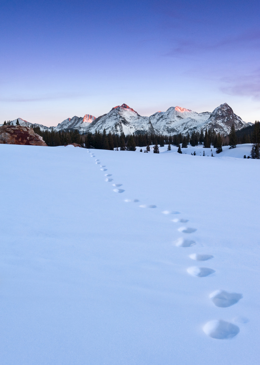 Photograph #203 - Paw Prints by Wayne Boland on 500px